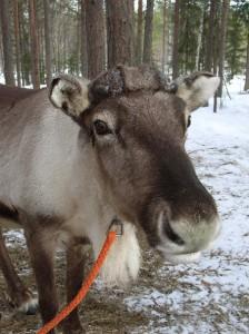 ascot finland pic1